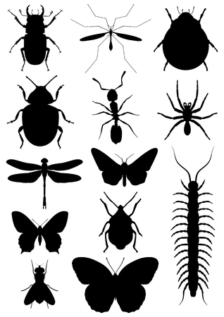 centipede: Illustration of ten insects isolated on white