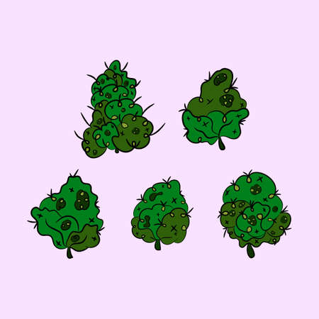 Set of inflorescence hemp. Marijuana. Vector illustration.