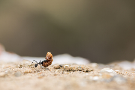 working: Ant working Stock Photo