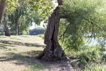 outoors: The Tree at Riverside Park