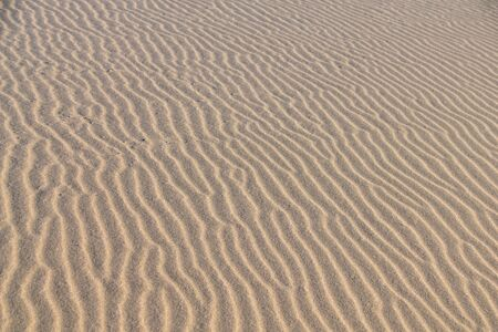 Wind ripples in the sand
