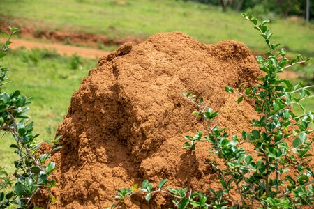 Termite nest mound in Masaka, Uganda Stock Photo
