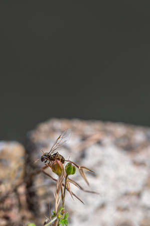 Flying ant day, 12 July 2020