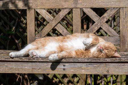 Orange cat resting on wooden bench