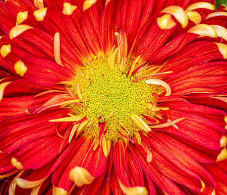 Large yellow and red flower bouquet