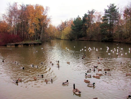 whittle: pond at whittle hall