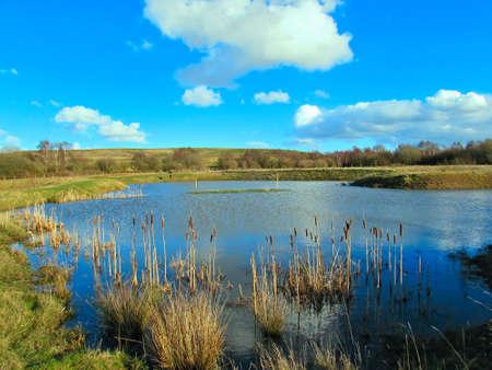 bullrush: Fishing lake at grange valley