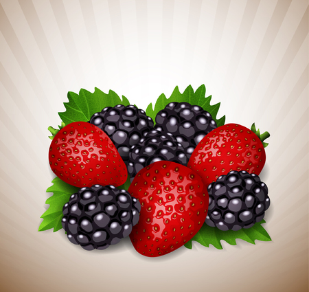 strawberries and blackberry with leaves Vector