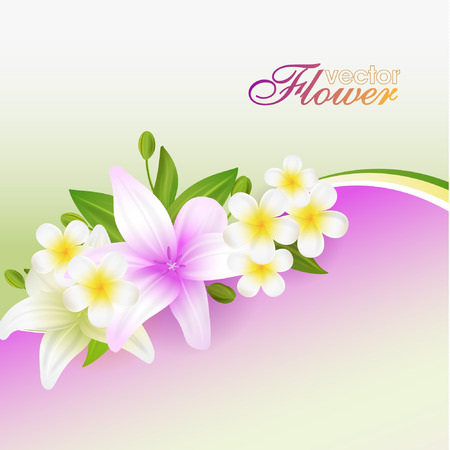 lilly: Beautiful flowers background, vector illustration with lilies - flowers, buds and leaves Illustration