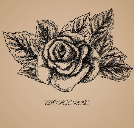 oldstyle: Rose - hand drawn Old-style vector illustration