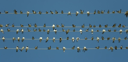 flock: A lot of birds sitting, singing and preening together. Doing things together is better than doing it alone. Stock Photo