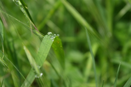 some waterdrops on  fresh gras after rain