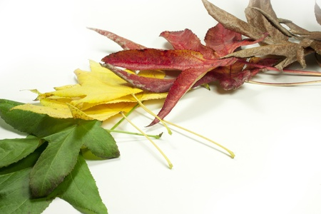 stems of leaves of different colors Stock Photo