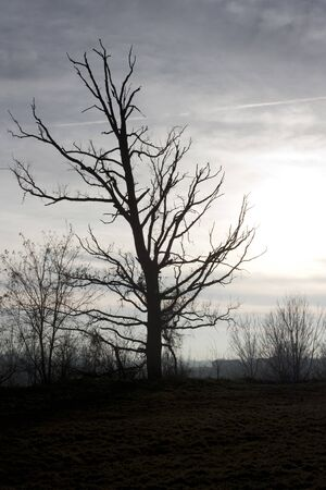 dreary: ambience landscape with dead tree at sunset