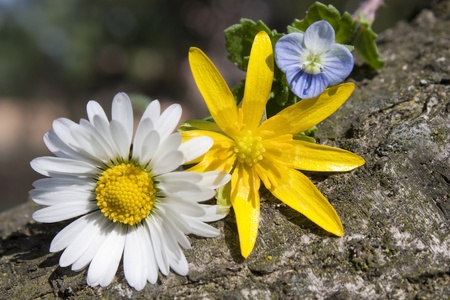 autochthonous: three veriety� of wildflowers on a log