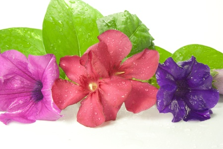 composition of colorful flowers with drops of water