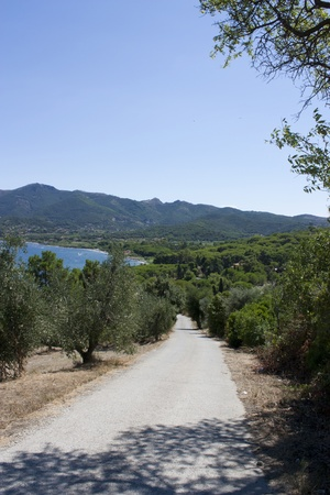 degrading: road with olive trees and Mediterranean trees to the sea Stock Photo