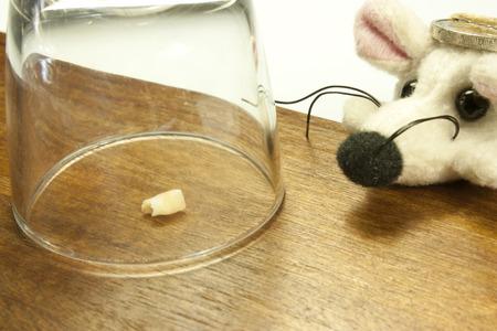 マウスを待っているガラスの下の歯します。