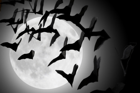 silhouettes of bats in the clouds During the full moon
