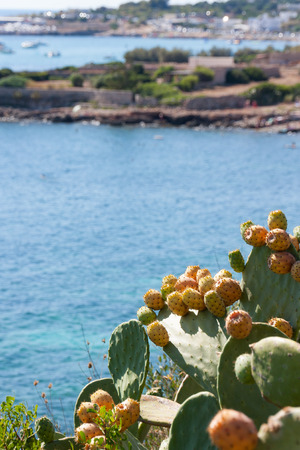 seize: prickly pears that have accrued over the sea Stock Photo