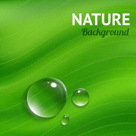 dew drop: Nature background with transparent water drops