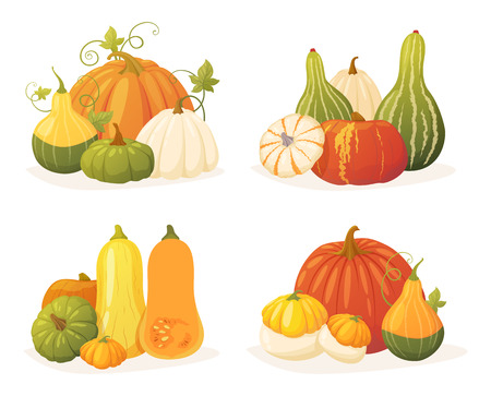 Autumn collection of colorful pumpkin set of different types, shapes and colors. Vector elements for design of your postcards, banners, illustrations, etc.