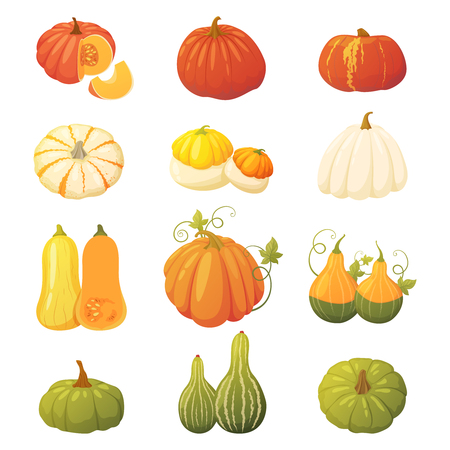 Collection d'automne d'un ensemble de citrouilles colorées de différents types, formes et couleurs. Éléments vectoriels pour la conception de vos cartes postales, bannières, illustrations, etc.