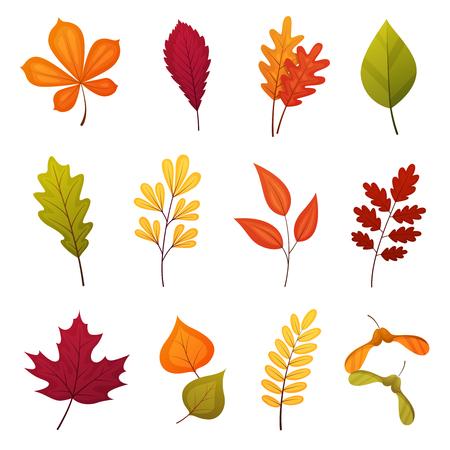 Colorful autmn leaves set, isolated on white background. Simple cartoon flat style, vector illustration. Stock Illustratie