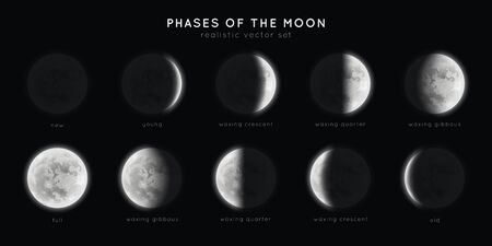 Realistic phases of the moon. Vector elements lunar collection. Moonlight