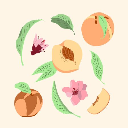 Vector illustration. Set with peaches Illustration