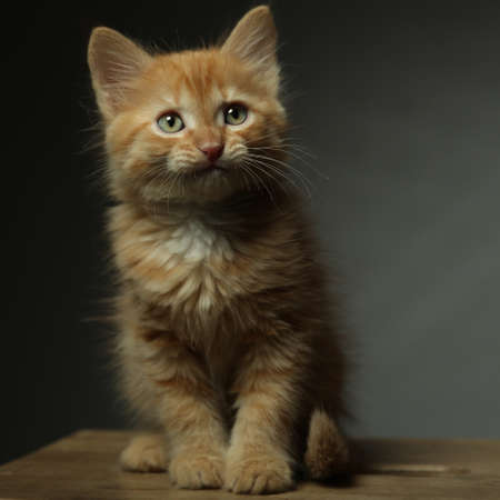 A small red kitten sits on a dark background and looks away