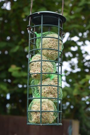 fat bird: Bird Feeder, Fat balls Stock Photo