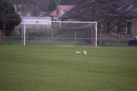 Football goal photo