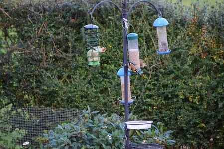 feeder: Birds on Bird feeder Stock Photo