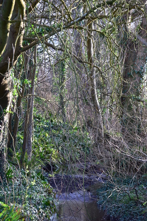 tress: tress in the woods, England