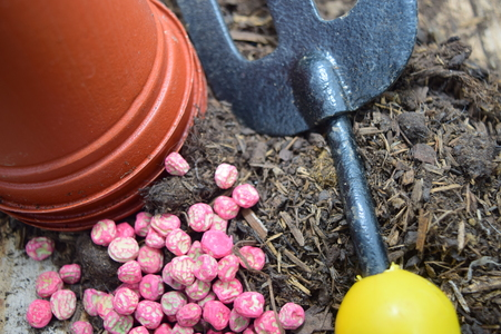 grower: pea seeds near a garden fork compost and pots Stock Photo
