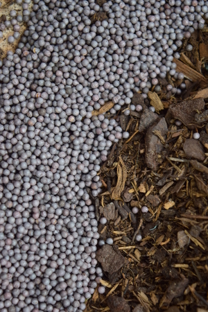 swede: Swede seeds near compost