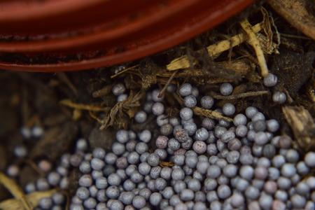 swede: Swede seeds Stock Photo