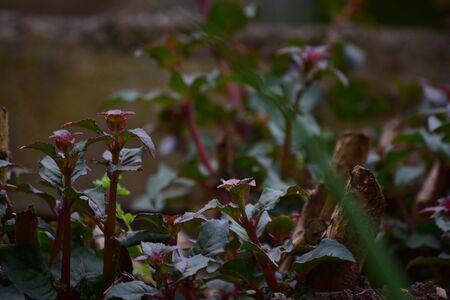 hedge: Hedge Stock Photo