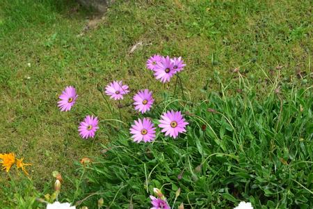 small garden: Small Garden