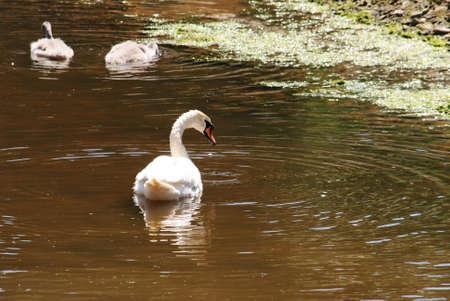 wheeling: Ducks