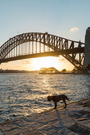 Dog beside the water with Sydney Harbour Bridge on the background. Stock Photo