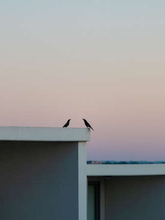 Two black birds on top of building. Stock Photo