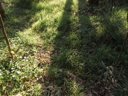 Sunlight and shadow on the grass field. Stock Photo