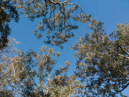 Tree branches under the clear blue sky.