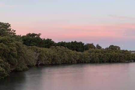 Sunset view along the plantation by Parramatta River.
