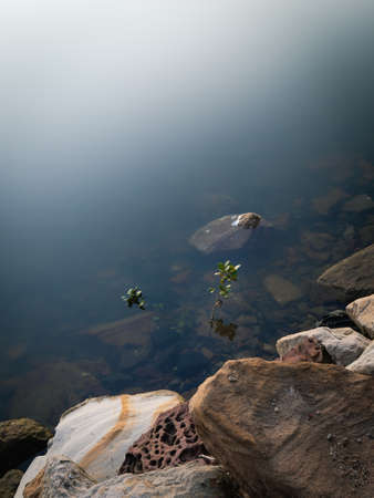 A small plant next to rock in the water.