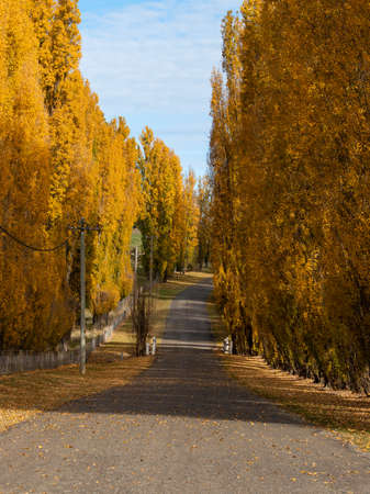 An empty road with yellow trees on the its side.
