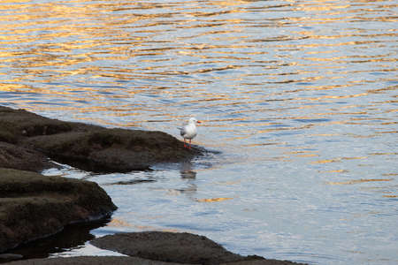 A seagull on the rock by the water.