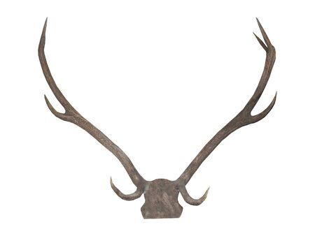 mounted: A Set od Deer Antlers Mounted as a Display.